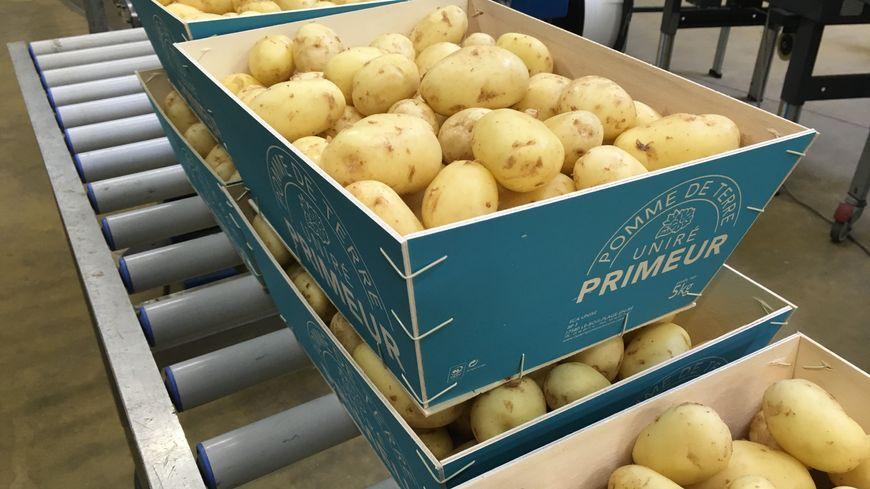 Sur l'île de Ré, la récolte des pommes de terre primeur AOP a débuté dès cette semaine, en avance !