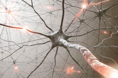 Le cerveau humain peut-il fabriquer de nouveaux neurones tout au long de sa vie ?