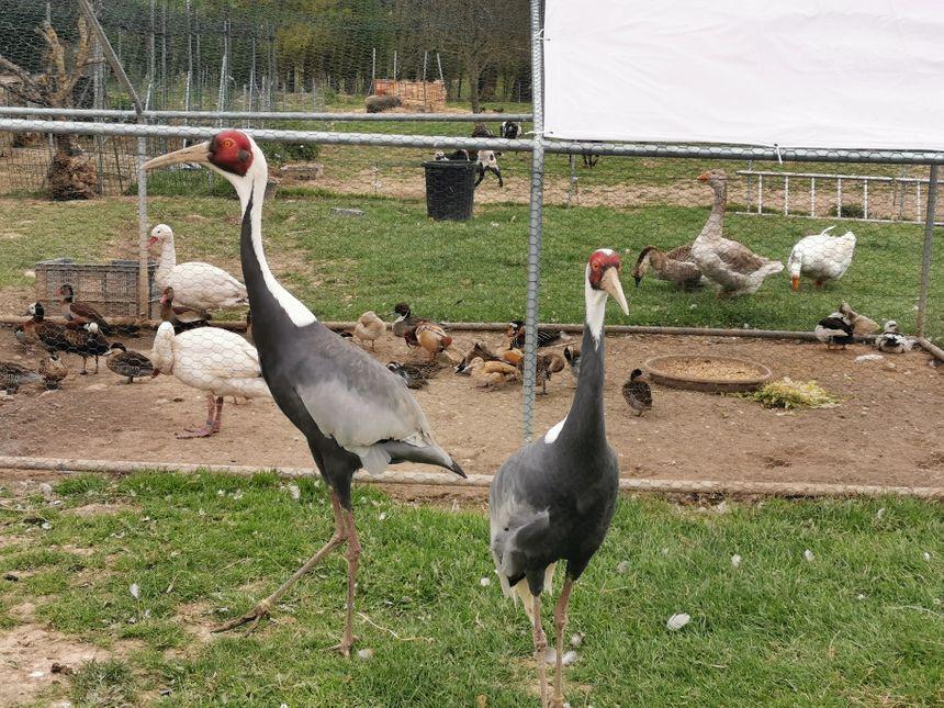 Les animaux ont été placés dans le jardin des Moreau en attendant la réouverture de la Ferme du Paradis