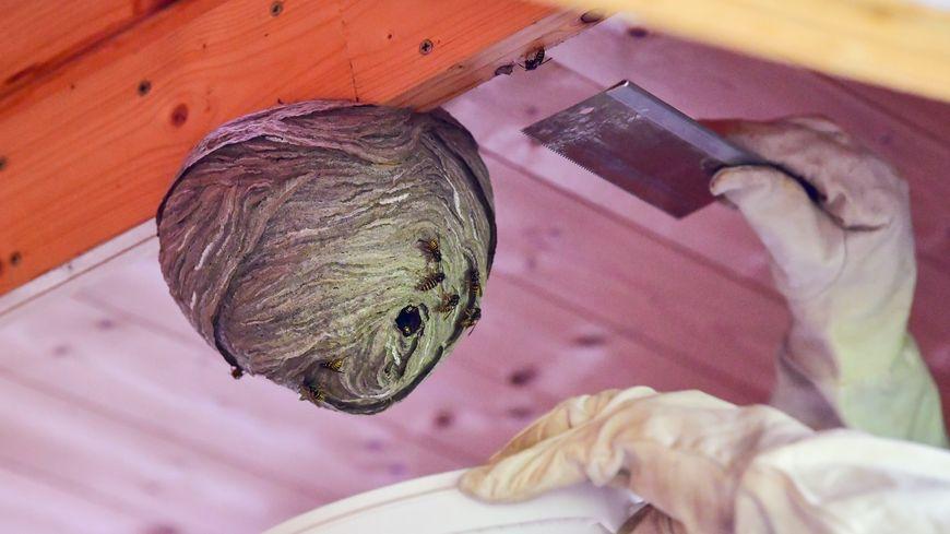 A partir du 1er mai, les pompiers du Bas-Rhin factureront les interventions sur les nids de guêpes (image d'illustration)