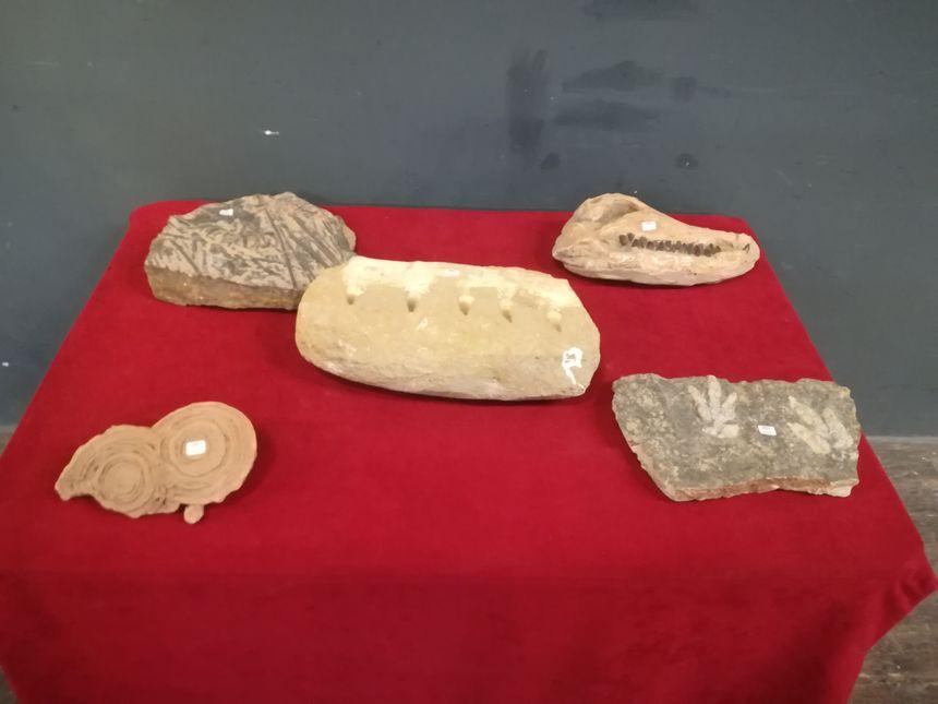 Ces fossiles datent de 70 à 300 millions d'années
