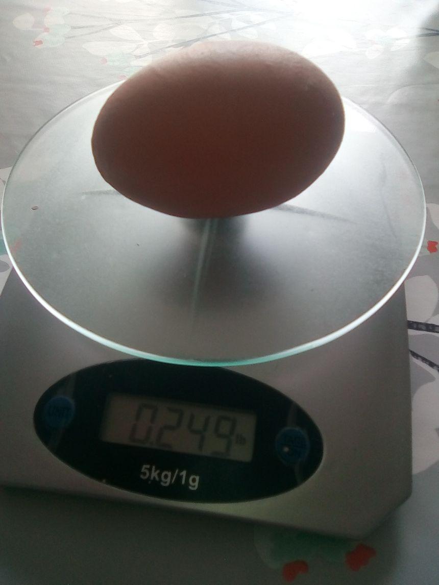 """""""Roussette a toujours fait de gros œufs mais jamais à ce point,"""" explique Noëlle"""
