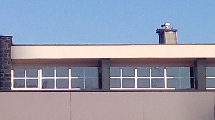 Sarralbe : un couple de cigognes a emménagé dans le nid fabriqué par les élèves de l'école