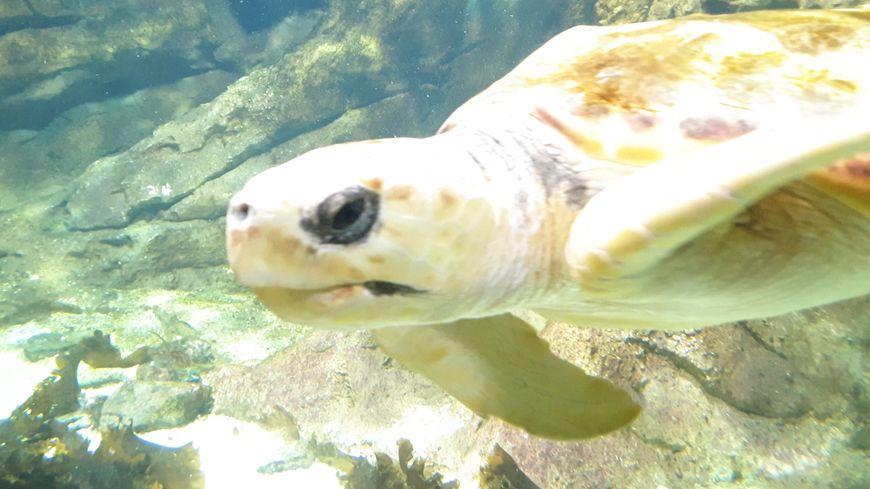 Mathilde, la tortue de mer de la Cité de la Mer.