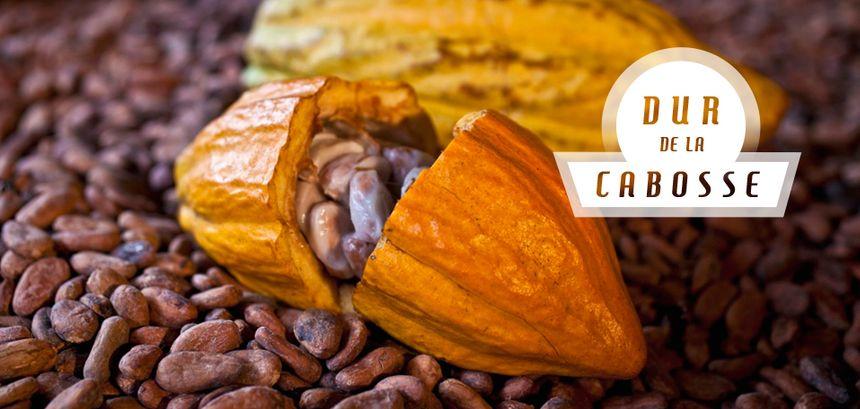 """Pour quelle raison appaelle-t-on le fruit du cacaoyer """"cabosse"""" ?"""