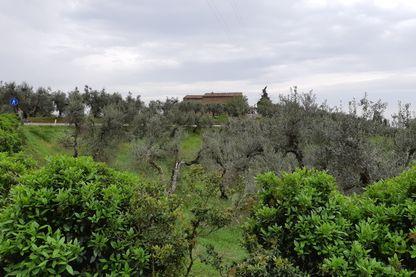 A Vinci, dans la campagne toscane, la maison natale du maître de la Renaissance.
