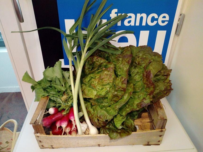 """La salade """"au merveille des 4 saisons"""", du aillet et des radis de la ferme """"Au sabot maraîcher"""""""