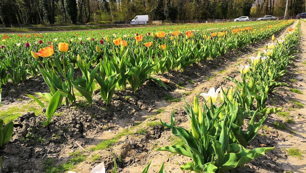 Horticulteur Val D Oise pour soutenir les horticulteurs, le département du loiret