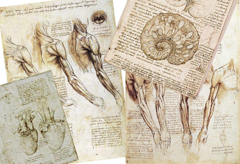 3 Dessins De Léonard De Vinci Anatomiste De Génie