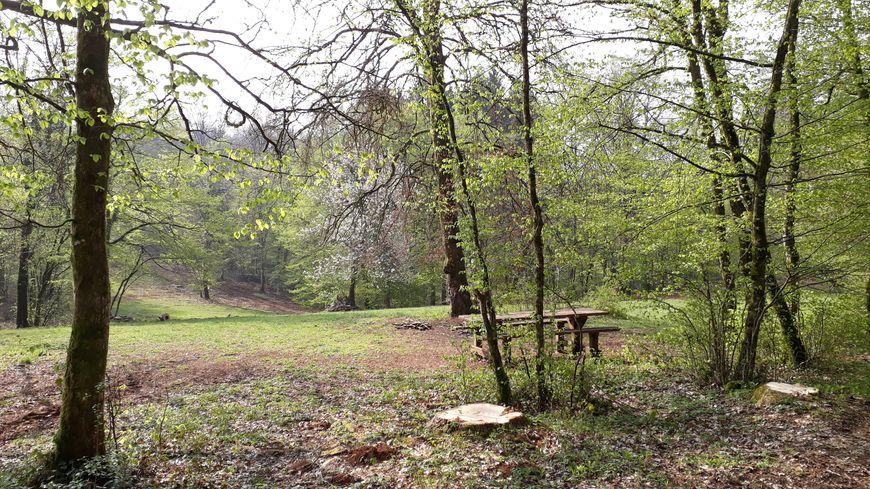 Une opération de ramassage des déchets s'est tenue ce dimanche matin en forêt de Chailluz à Besançon