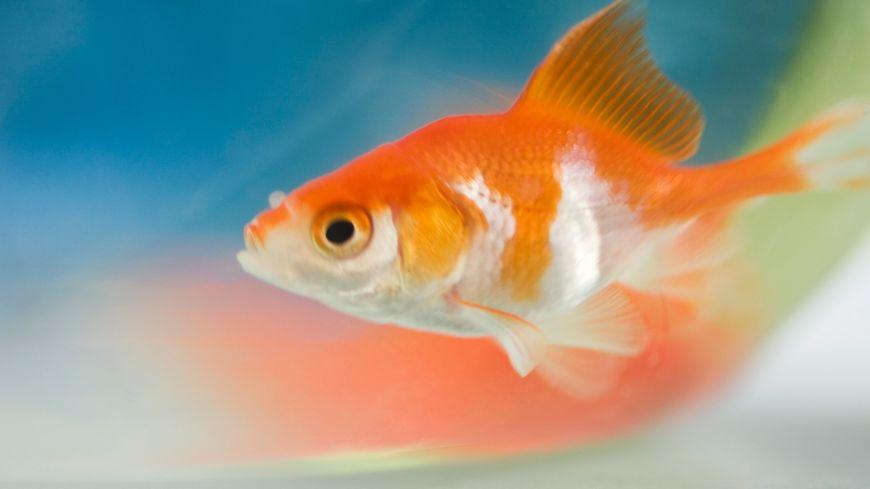 On ne vous reprochera donc pas d'avoir eu une mémoire de poisson ce lundi 1er avril
