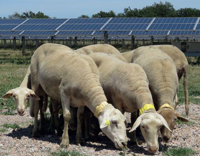 Parc photovoltaïque du Soler (66) d'Arkolia Energies