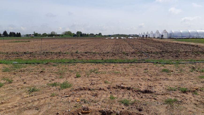 Au beau milieu des anciennes voies de la base aérienne, une parcelle de 2,5 hectares est utilisée pour la plantation de légumes.