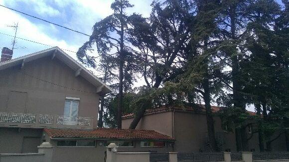 Un arbre déraciné menace de tomber sur la N7 à Tain-l'Hermitage (Drôme)