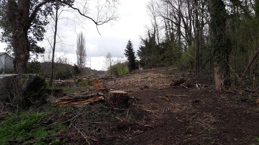 La zone d'implantation de la future déchetterie. Des arbres ont déjà été coupés.