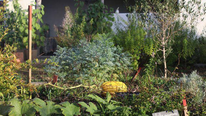 Les jardins de l'Humanité à Saint Vincent de Tyrosse.