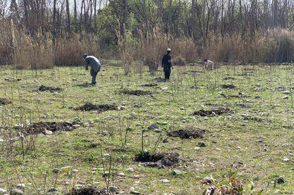 Des ouvriers agricoles plantent des arbres à Haripur (nord-ouest du Pakistan)
