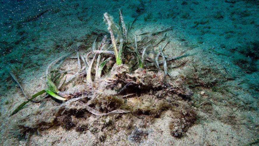 Herbier de posidonies détruit en Méditerranée