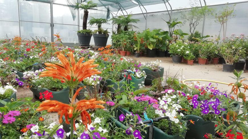 1000m2 de fleurs et d'arbustes ouverts au public pendant deux semaines
