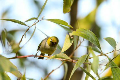 Et si vous preniez le temps d'aller écouter les oiseaux, ce week-end ?