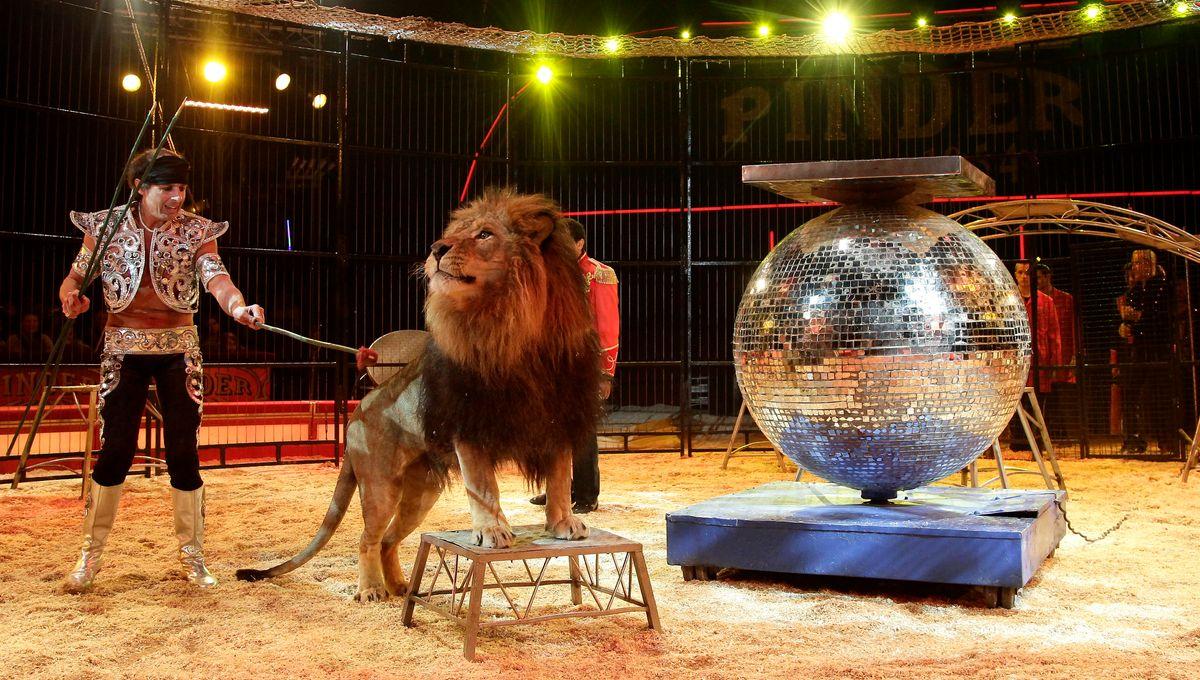 Une nouvelle pétition sur Internet pour interdire l'installation de cirques avec animaux sauvages en Mayenne
