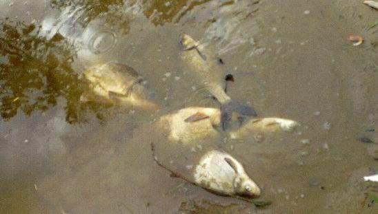 """Rocheservière : le maire se dit """"abandonné"""" des autorités face à la pollution de la rivière"""