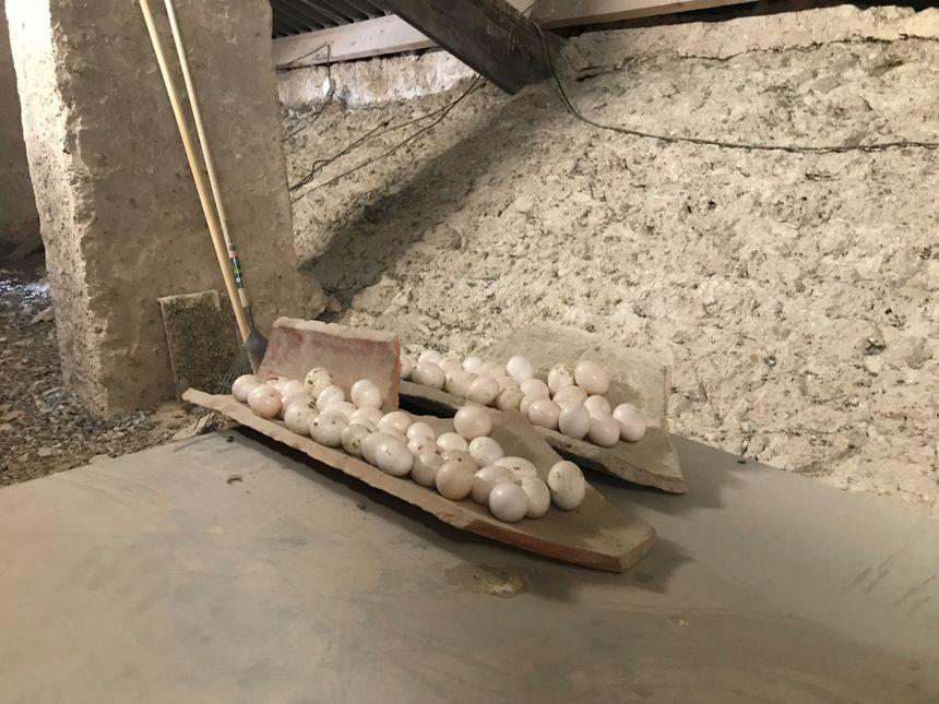 """Au mois de mai, 300 œufs ont été remplacés par des """"similis"""" en plastique"""