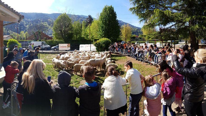 65 moutons ont rejoint la cour de l'école Jules Ferry : ils ne voulaient pas rater la récré.