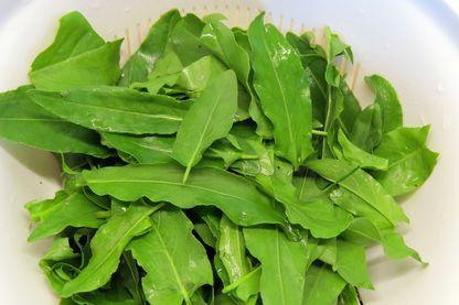 Feuilles d'oseille comestibles prêtes à manger ou à cuisiner.