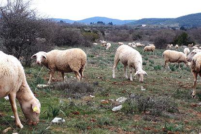 Sur le plateau du Larzac les moutons vont-ils cohabiter avec des panneaux solaires?