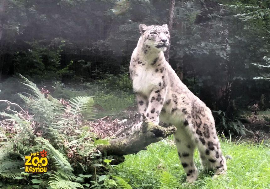 100 hectares, 600 animaux et 130 espèces.