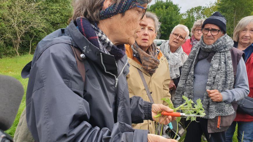 Anne Richard guide naturaliste lors d'une sortie botanique