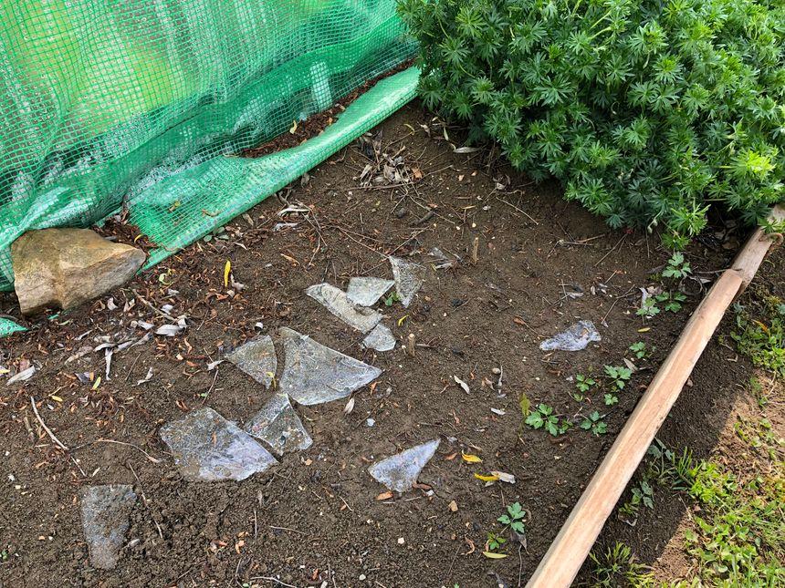 Encore des traces de gel ce lundi dans le jardin ouvrier.