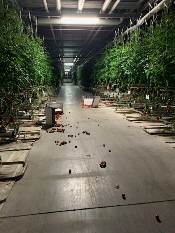 Au passage, des tomates sont renversées.
