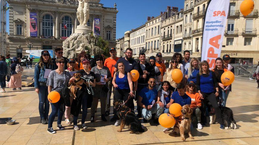 Les Chiens Et Chats De La Spa De Montpellier Reviennent A La Tele