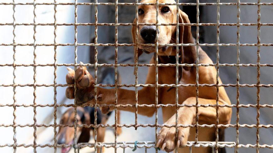 Les abandons d'animaux ont augmenté de 30% depuis le début de l'année.