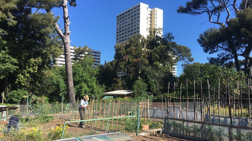 Les jardins familiaux Joseph Aiguier à Marseille : poumon vert en plein centre ville