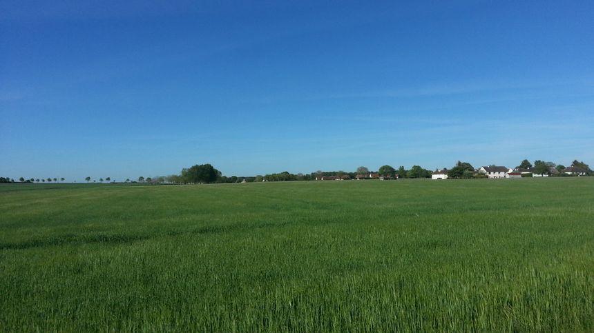 C'est dans ces champs, non loin des premières maisons du village, que pourraient être implantées les éoliennes