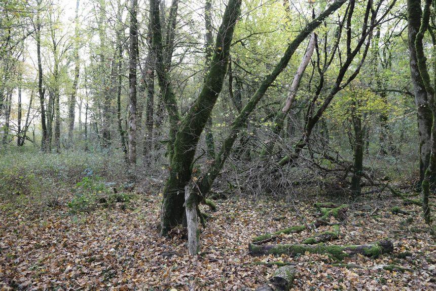 Le bois d'Esmoulins, où le corps d'Alexia Daval avait été découvert.