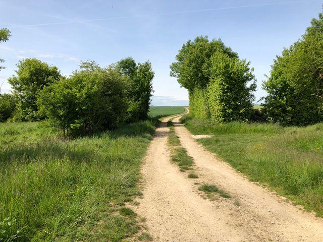 Plaine céréalière des Deux Sèvres, près de Niort.