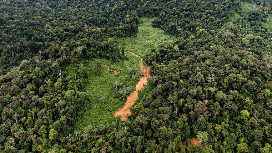 Le site ou devait s'implanter le projet de Montagne d'or, au sud de Saint-Laurent-du-Maroni en Guyane.