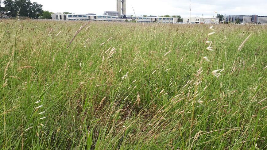 400 espèces recensées dans les prairies sauvages de l'aéroport de Toulouse Blagnac