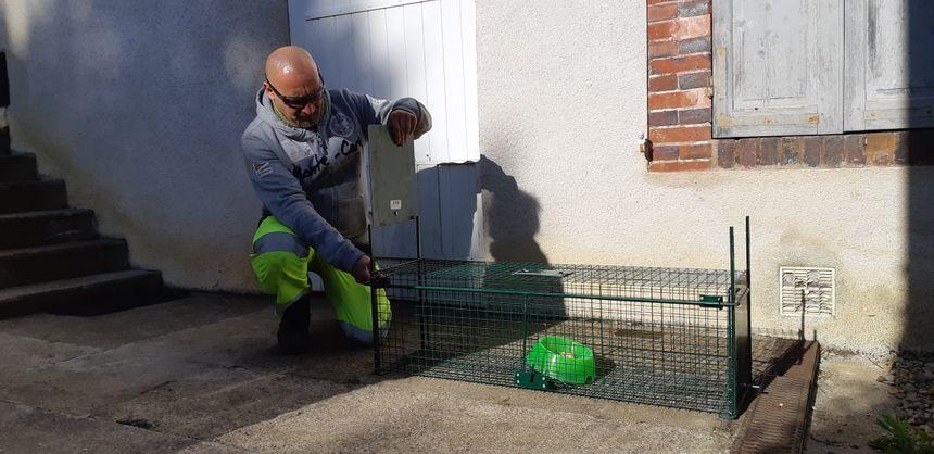 Romuald Bouzin, agent communal à Saint-Julien-du-Sault, lors de la pose d'un piège à chat