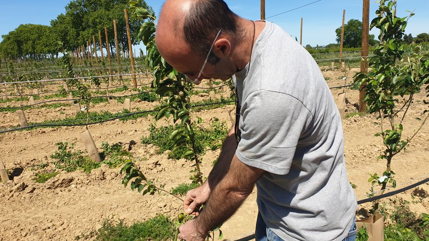 Les pommiers de Robert Cecchetti souffrent à cause du vent.