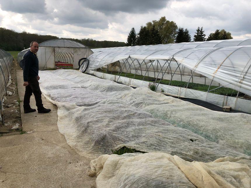 Serge Pancher a recouvert ses plantes d'un voile de forçage pour leur éviter de geler