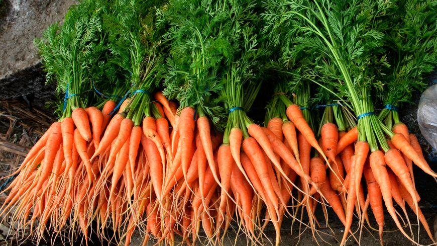 La carotte, l'un des légumes les plus cultivés en France!