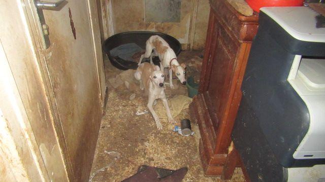 Torcy : Cinq chiens et dix chats vivaient dans leur excréments. Ils ont été sauvés par la Fondation Assistance aux Animaux.