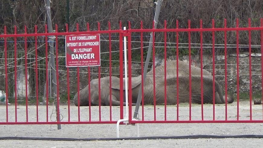 L'éléphante Tania prise en photo par l'association de défense des animaux One Voice