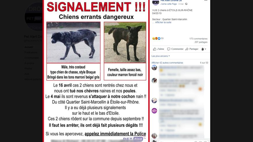 Droits des animaux en ligne datant