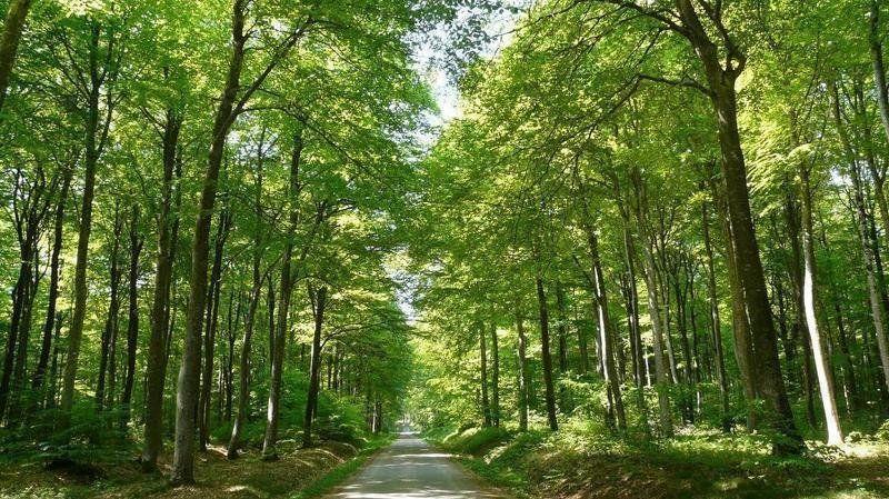 La forêt des Colettes
